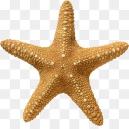 Starfish Png Cartoon Starfish Starfish Vector Starfish Drawing Starfish Silhouette Starfish Outline Starfish On Beach Starfish Monogram Cleanpng Kisspng