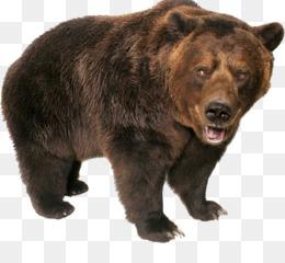 Black Bear Png American Black Bear Black Bear Cartoon Black Bear Sketch Black Bear Head Cute Black Bear Black Bear Line Art Cleanpng Kisspng Download transparent bear png for free on pngkey.com. black bear png american black bear