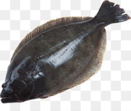 Olive Flounder Png And Olive Flounder Transparent Clipart Free Download Cleanpng Kisspng Stop by today and enjoy family style dining and fresh italian food at our local restaurants. olive flounder png and olive flounder