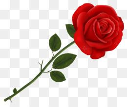 Red Rose Png Red Rose Border Red Rose Flower Red Rose Vector