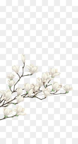 Magnolia Png Magnolia Flower Magnolia Tree Southern Magnolia