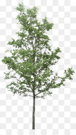 Family Tree Background