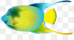 Saltwater Fish Png And Saltwater Fish Transparent Clipart Free Download Cleanpng Kisspng