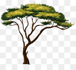 African Trees Png And African Trees Transparent Clipart Free Download Cleanpng Kisspng