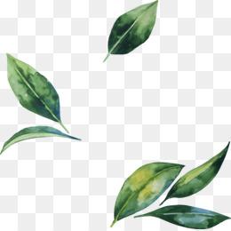 Green Leaf Png Green Leaf Green Leaf Border Green Leaf