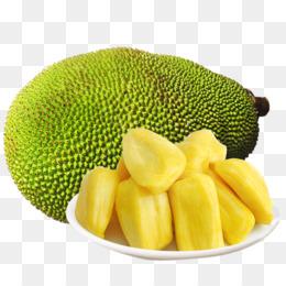 Jackfruit Png Jackfruit Tree Jackfruit Seeds Cleanpng Kisspng ✓ free for commercial use ✓ high quality images. jackfruit tree jackfruit seeds