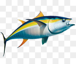 bigeye tuna png and bigeye tuna transparent clipart free download cleanpng kisspng bigeye tuna png and bigeye tuna