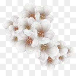 Bunga Sakura Png Bunga Sakura Jepang Cara Membuat Bunga Sakura