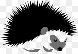 Hedgehog Porcupine