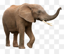 Elephants Png And Elephants Transparent Clipart Free Download Cleanpng Kisspng Elephant png image is a free png picture with transparent background. elephants png and elephants transparent