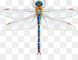 Dragonfly Wings Png Dragonfly Wings Outline Dragonfly