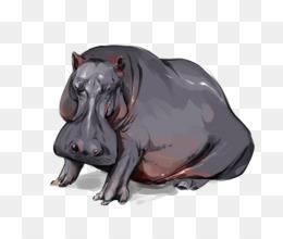 Hippopotamus Wildlife