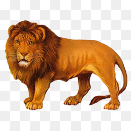 Narnia Png Chronicles Of Narnia Narnia White Witch Aslan Narnia Cleanpng Kisspng Download 56 lion outline free vectors. narnia png chronicles of narnia