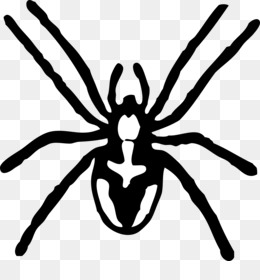 Download Spider Clipart Clipart Free Hatenylo - Spider Clipart PNG Image  with No Background - PNGkey.com