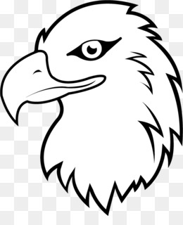 Whitetailed Eagle Png And Whitetailed Eagle Transparent Clipart Free Download Cleanpng Kisspng