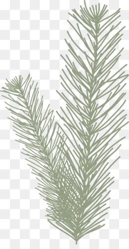 Black and White Clip Art Pine Needle