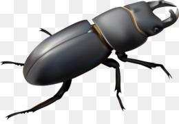 Beetle Machine