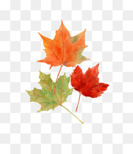 Autumn Leaves Watercolor