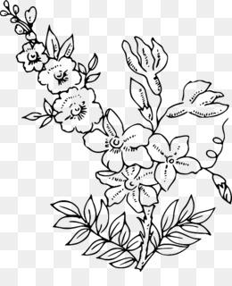 Flower Outline PNG , Sunflower Outline, Lotus Flower Outline