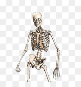 Skeletal Animation PNG and Skeletal Animation Transparent