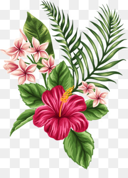 Hawaiian Hibiscus PNG , drawing,of,hawaiian,hibiscus