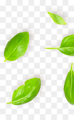 Herbs and Spices - Cookchat.com |Basil Leaves In Spanish