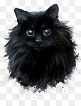 Domestic Long Haired Cat Png And Domestic Long Haired Cat Transparent Clipart Free Download Cleanpng Kisspng