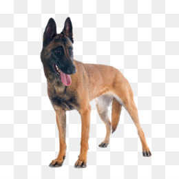 Working Dog Png Military Working Dog Cleanpng Kisspng