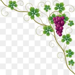 Grapes Png Grapes Vector Wine Grapes Cartoon Grapes Grapes Black And White Grapes Red Grapes Outline Grapes Sketch Grapes Clip Cleanpng Kisspng