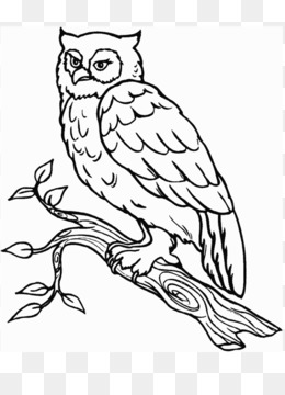 Owl Book Png And Owl Book Transparent Clipart Free Download