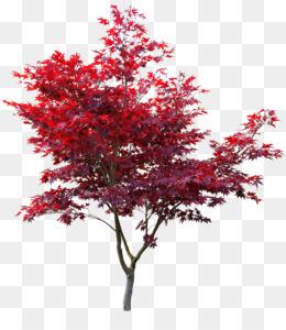 Red Maple Leaf Png Red Maple Leaf Logo Cleanpng Kisspng