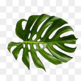 Tropical Leaves Png Tropical Leaves Watercolor Tropical Leaves Tropical Leaves Border Tropical Leaves Background Tropical Leaves Wallpaper Tropical Leaves Design Blue Tropical Leaves Tropical Leaves Printable Tropical Leaves Desktop Wallpaper Blue tropical leaves in repeat patt. tropical leaves png tropical leaves