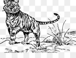 Tigre Disegno Png Trasparente E Tigre Disegno Disegno Oro Tigre