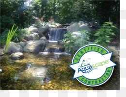 Aquascape Png And Aquascape Transparent Clipart Free Download Cleanpng Kisspng