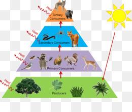 Tree Diagram Png Tree Diagram Icon Probability Tree