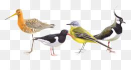 Bird Cartoon