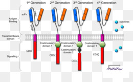 Chimeric Antigen Receptor Text