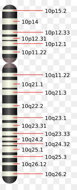 Chromosome Text