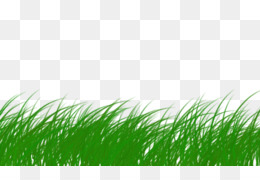 rumput png and rumput transparent clipart free download cleanpng kisspng rumput png and rumput transparent
