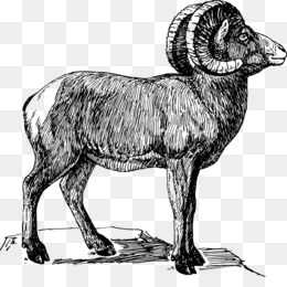 Mountain Bighorn Sheep Coloring page | Coloring pages, Free ... | 260x260