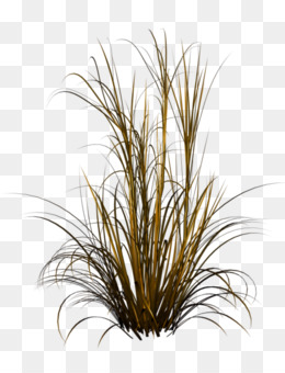 Feather Reed Grass Png And Feather Reed Grass Transparent Clipart Free Download Cleanpng Kisspng