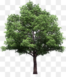 Trees Cartoon Png Download 713 630 Free Transparent Narra Png Download Cleanpng Kisspng Almost files can be used for commercial. trees cartoon png download 713 630