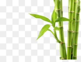 bambu png and bambu transparent clipart free download cleanpng kisspng bambu png and bambu transparent clipart