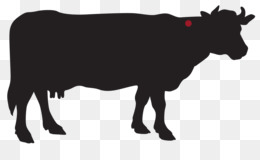 Cow Background png download - 1600*973 - Free Transparent Highland Cattle  png Download. - CleanPNG / KissPNG
