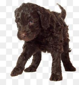 Cockapoo Dog PNG - cockapoo-dogs-for-adoption printable-coloring ... | 280x260