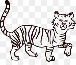 Tigre Siberiana Png Trasparente E Tigre Siberiana Disegno