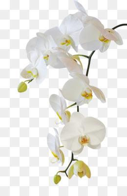 Orchid Plant Png Orchid Plant Labels Orchid Plant Wallpaper