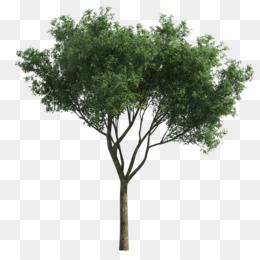 Trees Cartoon