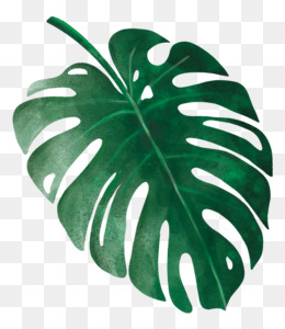 Tropical Leaves Png Tropical Leaves Watercolor Tropical Leaves Tropical Leaves Border Tropical Leaves Background Tropical Leaves Wallpaper Tropical Leaves Design Blue Tropical Leaves Tropical Leaves Printable Tropical Leaves Desktop Wallpaper Edit and share any of these stunning. tropical leaves png tropical leaves
