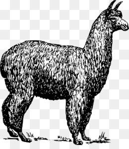 Llama Cartoon